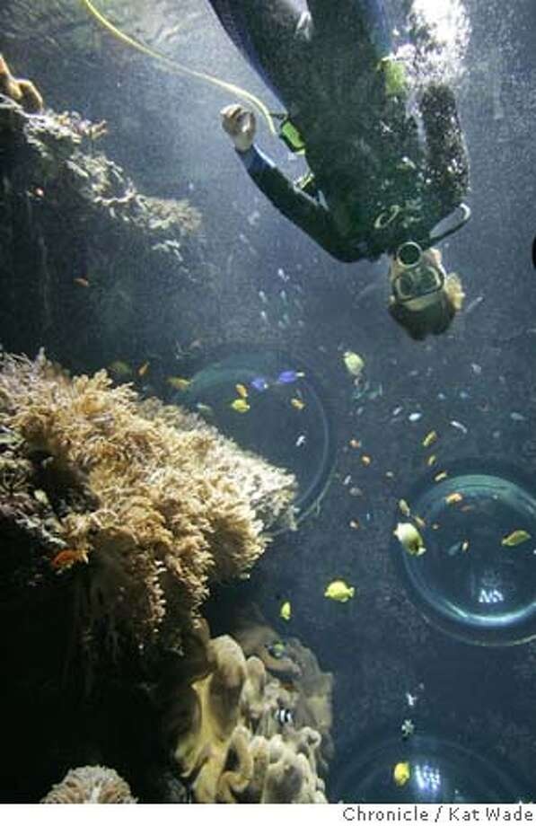 CORALXX_0022_KW_.jpg  Biologist Seth Wolters, who is instrumental in growing live coral in tanks that create a coral farm at the California Academy of Sciences poses for a portrait inside the tank that holds live coral they have grown on Thursday June 1, 2006. (Kat Wade/The Chronicle) ** Seth Wolters cq Mandatory Credit for San Francisco Chronicle and photographer, Kat Wade, /Mags out Photo: Kat Wade