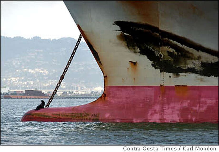 A sea lion sits atop the bulbous nose on the bow of the Lion's Gate Bridge container ship off the Port of Oakland in San Francisco Bay Thursday March 3, 2005. Contra Costa Times / Karl Mondon Photo: KARL MONDON