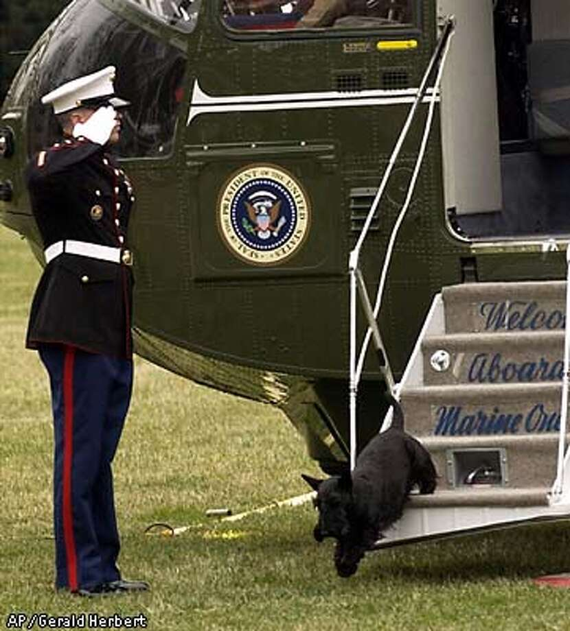 A Marine guard salutes as Barney disembarks from Marine One on the South Lawn of the White House, March 14, 2004. Barney was returning from Camp David with his master, President Bush. (AP Photo/Gerald Herbert) Photo: GERALD HERBERT