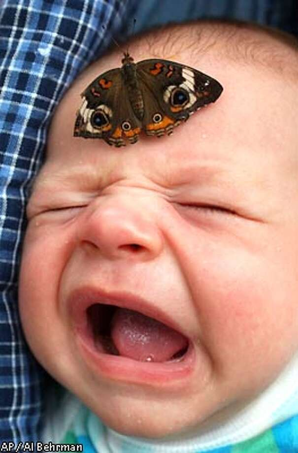 Смешные бабочки фото