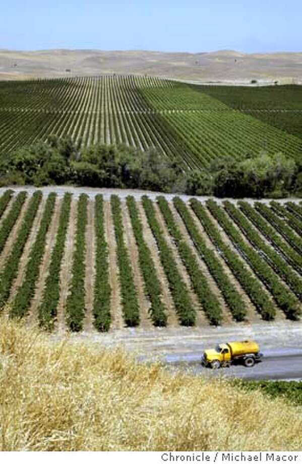 A view of R.H. Phillips' vineyards southwest of Sacramento. Yolo County, just south west of Sacramento, is fast becoming the new wine and food mecca of Northern California.  8/12/03 in YOLO COUNTY. MICHAEL MACOR / The Chronicle Photo: MICHAEL MACOR