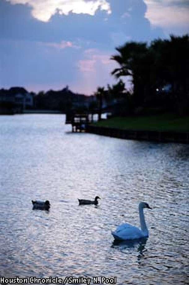 CONTACT FILED: SUGAR LAKES SUBDIVISION (FORT BEND COUNTY)  PROJECTS FUTURE: Swans and ducks glide across the water in the Sugar Lakes subdivision in Fort Bend County, Thursday afternoon, July 27, 2000. While the picturesque waterways that wind through the subdivision enhances quality of life, the canals are off-limits as a source drinking water they are part of a canal system that diverts water from the Brazos River. The water merely passes through the Sugarland area on it's way to residential and commercial users miles away in Texas City. (Smiley N. Pool/Chronicle) 07/27/00 Photo: Smiley N. Pool