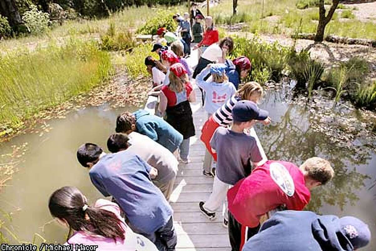 Students stop along the bridge for a lesson at the pond. Students from Glorietta Middle School spend their day exploring the 28 acre nature preserve. The Orinda School District is the first is the first in the nation to create a