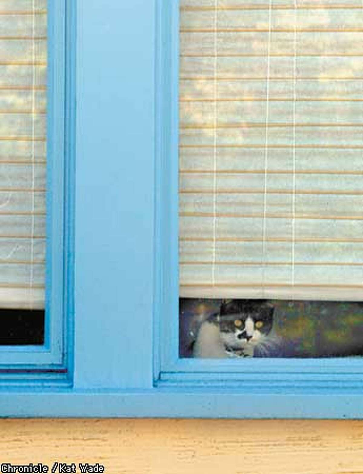 Edna the cat peeks out from Ella Hirst's (CQ) Oakland home is painted in Kelly Moore yellow and blue trim with color consulting by Judy B. Goode of Goode Consulting. SAN FRANCISCO CHRONICLE PHOTO BY KAT WADE