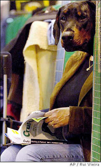 A doberman and owner sit together at the annual Crufts Dog Show, at the National Exhibition Centre i
