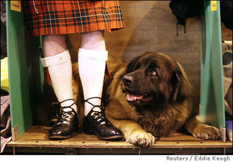 A Scottish dog owner stands beside his Leonberger at the 103rd Crufts dog show in Birmingham, Englan