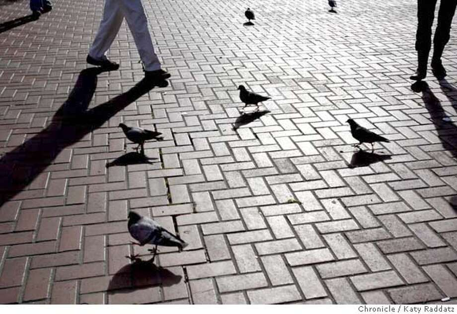 FEATURE_FARMERSMARKET_041_RAD.jpg  SHOWN: At the end of the day at the Civic Center Farmers Market, pigeons and pedestrians cast long shadows.  (Katy Raddatz)  ** Photo: Katy Raddatz