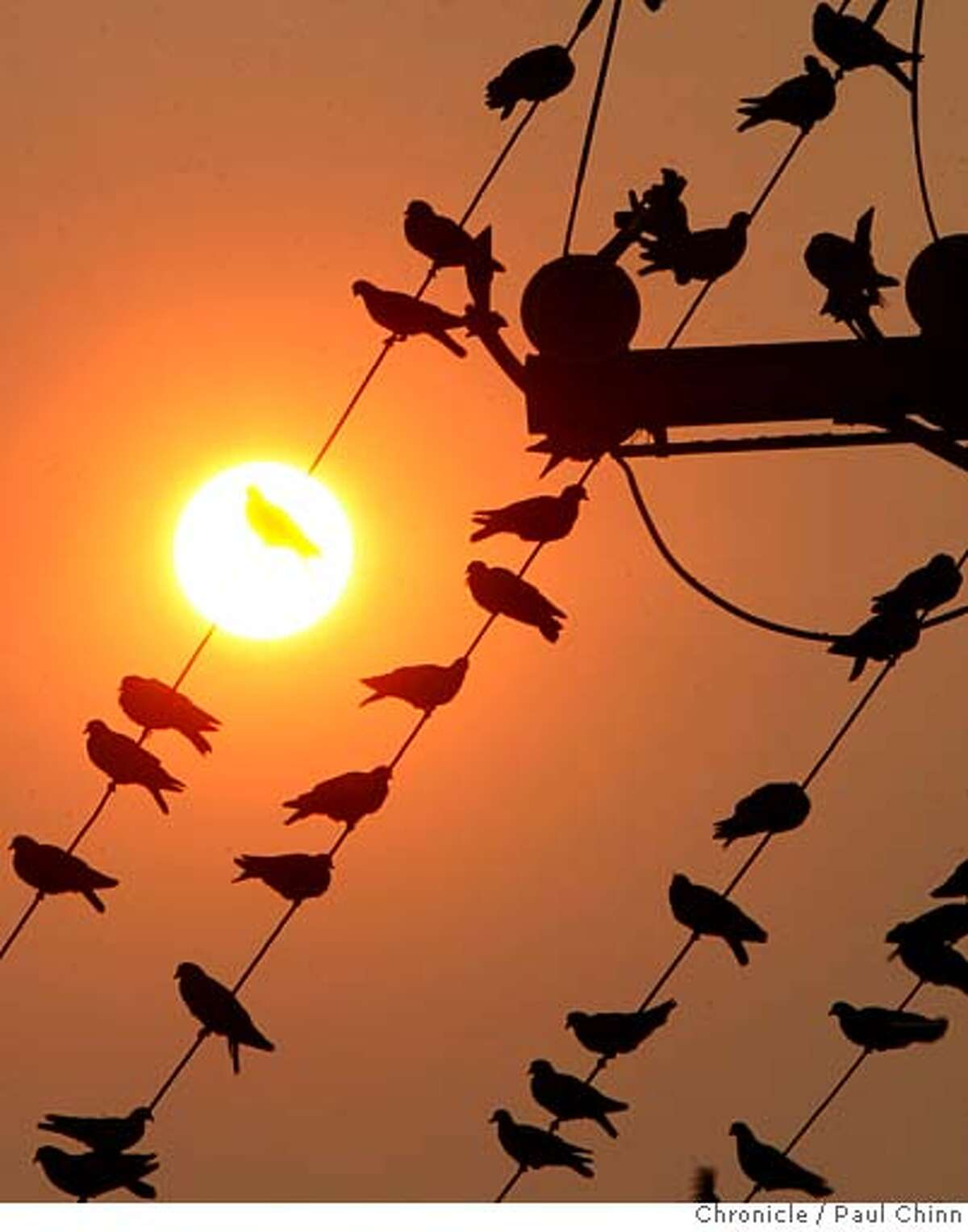 A flock of pigeons bask under an unusually red sunrise in Berkeley, Calif. on Thursday, Sept. 6, 2007. Smoke from a forest fire in southern Santa Clara County is drifting across the Bay Area creating the reddish hue. PAUL CHINN/The Chronicle