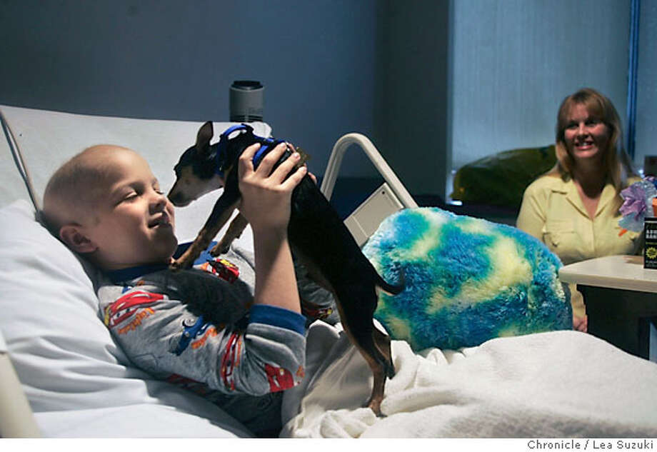 Kyle Wetle, 8, is reunited with Chemo, his Chihuahua puppy in his hospital room at UCSF Children's Hospital on Wednesday, September 6, 2006. In the background is Kyle grandmother, Kathi Sheehan.  Photo by Lea Suzuki/The San Francisco Chronicle  Photo taken on 9/6/06, in San Francisco, CA. **(themselves) cq. Photo: Lea Suzuki