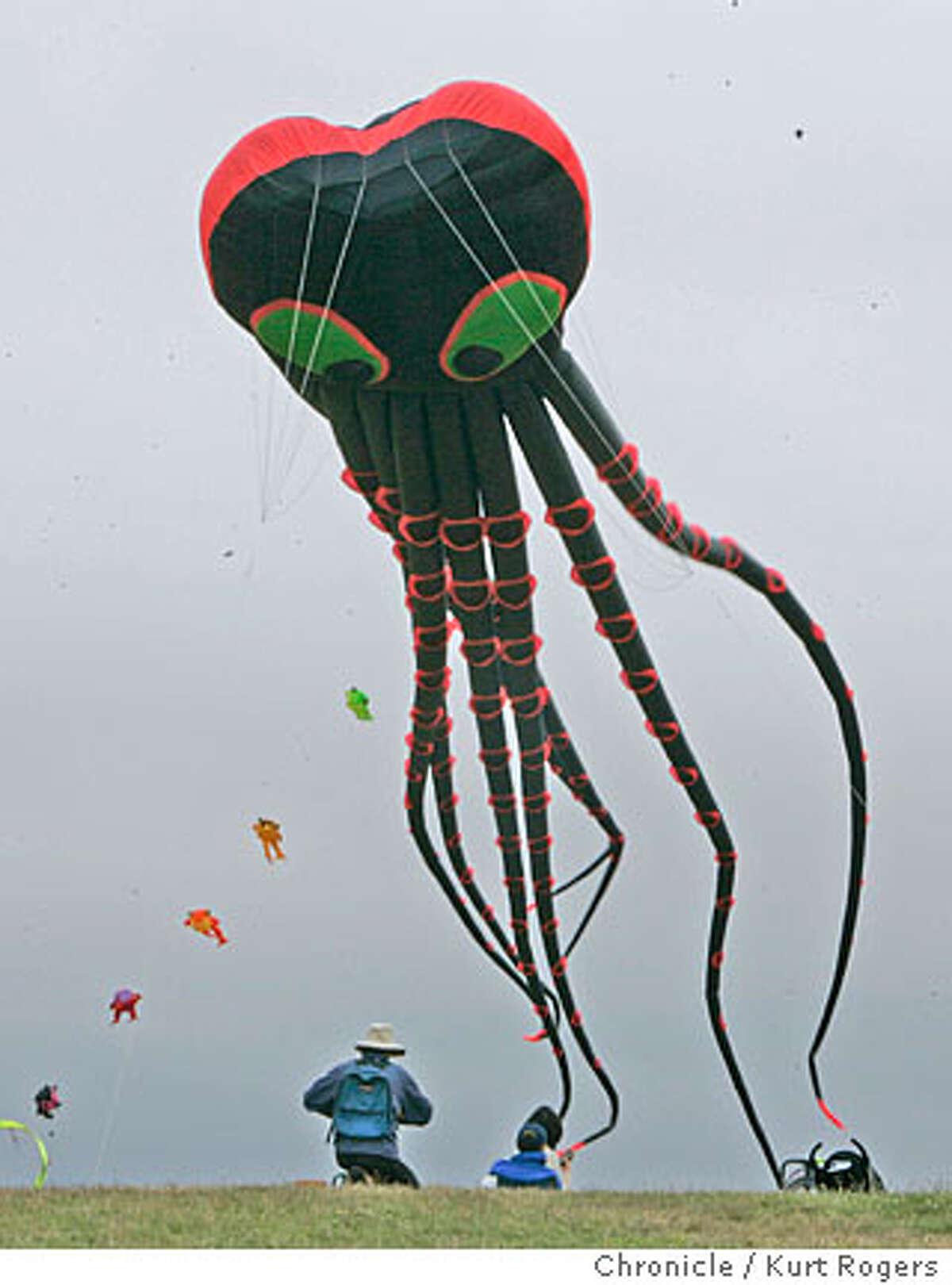 The Berkeley Kite Wranglers broke a new world record by flying 10 octopi at berkeley marina KURT ROGERS/THE CHRONICLE SAN FRANCISCO THE CHRONICLE SFC