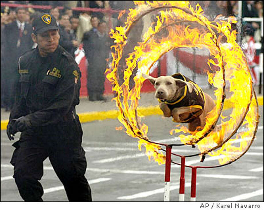 Question 32:It's the region responsible for 90 percent of the world's earthquakes  and 75 percent of its volcanic eruptions - and also a Johnny Cash hit.  What is it? (Here's a hint: what is this dog jumping through?) Photo: KAREL NAVARRO