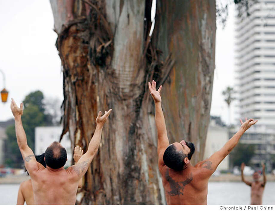 Volunteers stripped naked to be photographed surrounding a eucalyptus tree on Lakeshore Avenue at Lake Merritt in Oakland, Calif. on Saturday, June 16, 2007. Photographer Jack Gescheidt recruited the models to protest the city's planned cutting of over 200 trees along the lakefront for a landscaping improvement plan. Among Gescheidt's previous photo sessions for his Tree Spirit Project includes nudes surrounding the grove of trees at Memorial Stadium at UC Berkeley in March. PAUL CHINN/The Chronicle  **Jack Gescheidt Photo: PAUL CHINN