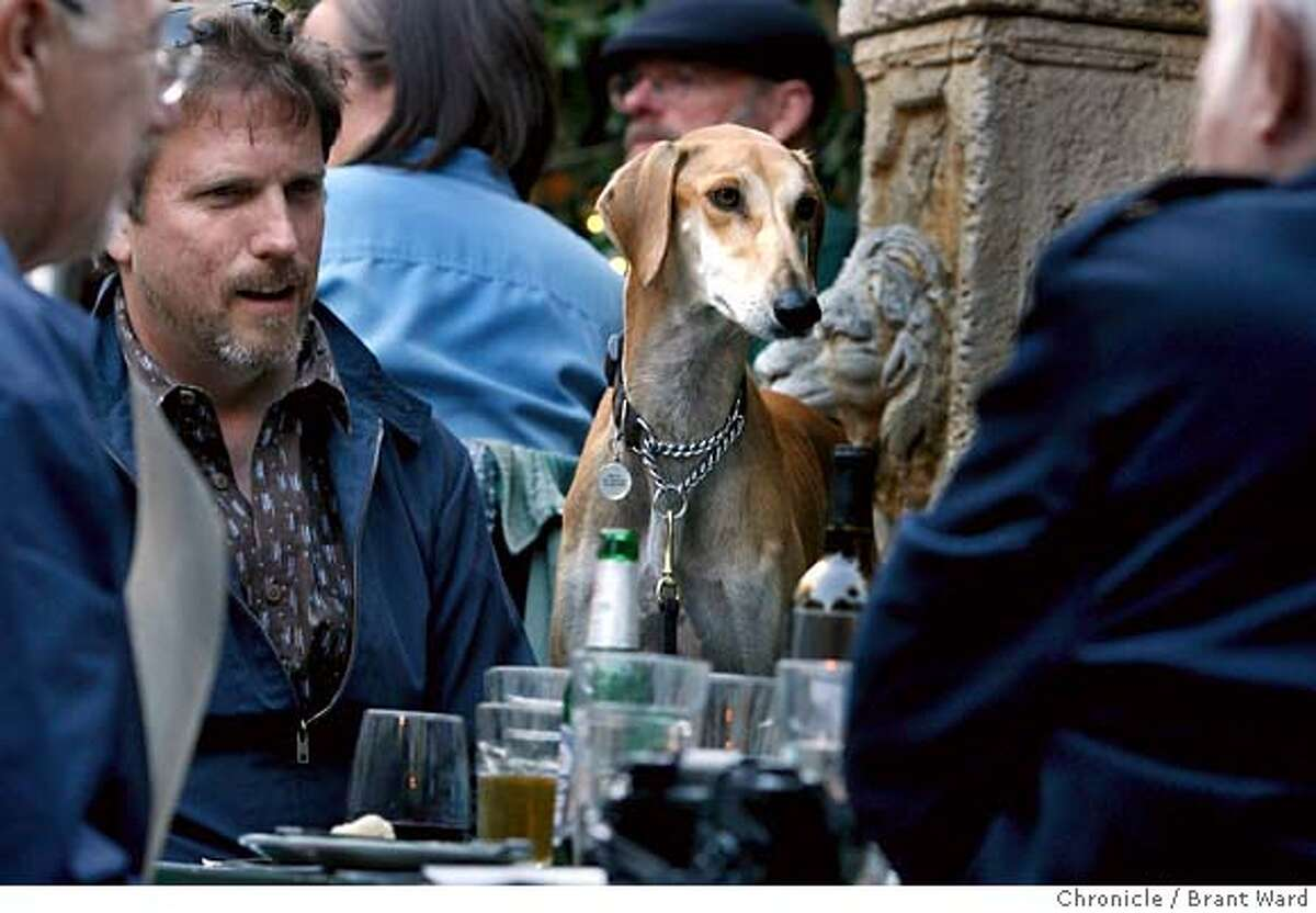 sfdog_230.JPG Gary Ellis and his dog Wilco, a Saluki, enjoy dinner at Zazie restaurant on Cole Street. The French restaurant welcomes dogs on Monday, and Wilco finds the conversation quite stimulating. Dogs now outnumber children in San Francisco and District 8 has the most dense dog population. Visits to dog hangouts: Best in Show store on Castro St., the Duboce Park, Wags hotel and Zazie restaurant. {Brant Ward/San Francisco Chronicle}6/11/07