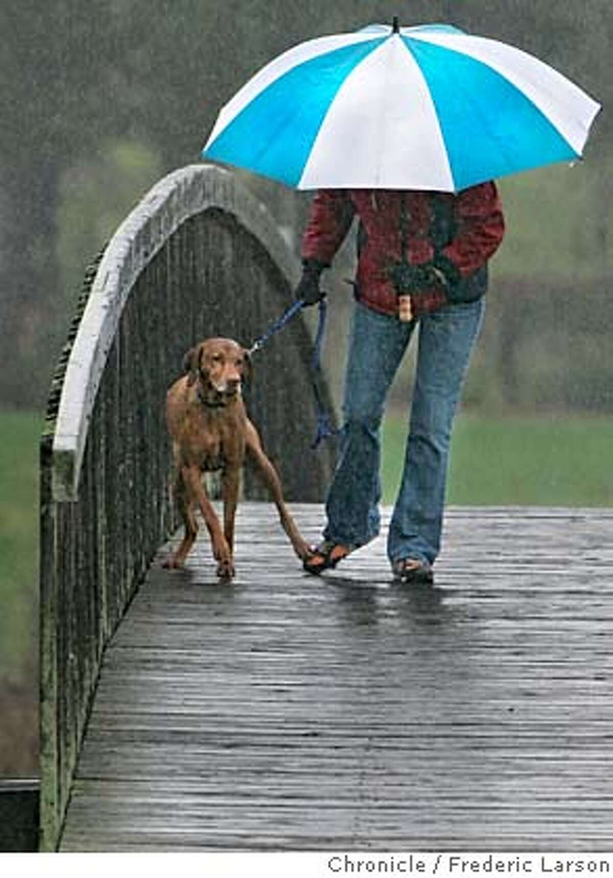 """WEATHER_0187_fl.jpg """"Chanuncy"""" the wet pooch was not all game in walking in the rain as owner Carol Freeman of Mill Valley leashes the pup along a rainy footbridge in Mill Valley. The calm before the bigger storm tonight had some Marin residents out walking in rain. 12/27/05 Mill Valley CA Frederic Larson San Francisco Chronicle"""