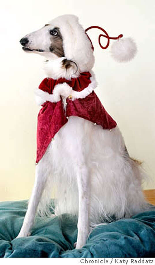 Story is about gifts for pets. SHOWN: LacyLu (cq), a borzoi, in her Christmas finery, including a handmade jacket from Melissa Egbert, a funny hat from Nina LeBaron (cq), and a ruff from Noe Valley Pet Co. LacyLu is owned by Adrianne Marcus and her husband Ian Marcus, and lives in San Rafael. Photo taken on 12/8/05, in San Rafael, CA.  By Katy Raddatz / The San Francisco Chronicle Photo: Katy Raddatz