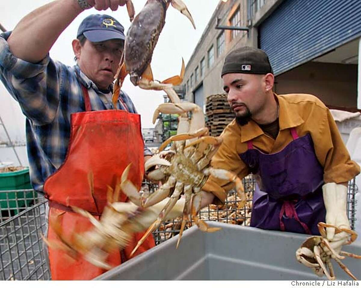 CRABS29_049_LH.JPG Peter Lee (left) and Martin Gonzalez (right) sorting incoming crab for Alber Seafoods. Photographed by Liz Hafalia on 11/28/05 in San Francisco, California. SFC Creditted to the San Francisco Chronicle/Liz Hafalia