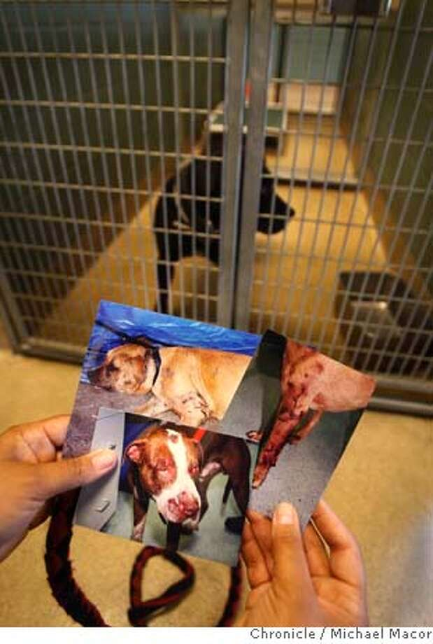 knapp19_112_mac.jpg Many dogs are brought into the Oakland Animal Shelter showing classic signs of being involved in fighting. Animal Control Officer Nicole Frede holds photos of dogs that have come through the shelter with various wounds consistent with dog fighting. Michael Vick indictment on charges of running a dog fight operation. The Oakland Animal Shelter has a few dogs in their kennels after they were taken into protective custody, suspected of being involved in dog fights by their owners. Photographed in, Oakland, Ca, on 7/18/07. Photo by: Michael Macor/ The Chronicle Ran on: 07-19-2007  Nicole Frede, Oakland Animal Control officer, shows photos of dogs that have been brought to the city's animal shelter with wounds consistent with dogfighting. Photo: Michael Macor