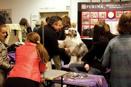 NEW YORK - FEBRUARY 13:   Grand Champion Oakhurst Crusin' in Chrome, an Australian Shepard, shakes the hand of his owner Michael Rhoads, or Maryland, backstage at the Westminster Kennel Club Dog Show after winning best of opposite sex on February 13, 2012 in New York City.  The Westminster Kennel Club Dog Show first held in 1877, is the second-longest continuously held sporting event in the U.S., second only to the Kentucky Derby. Photo: Michael Nagle, Getty Images / 2012 Getty Images