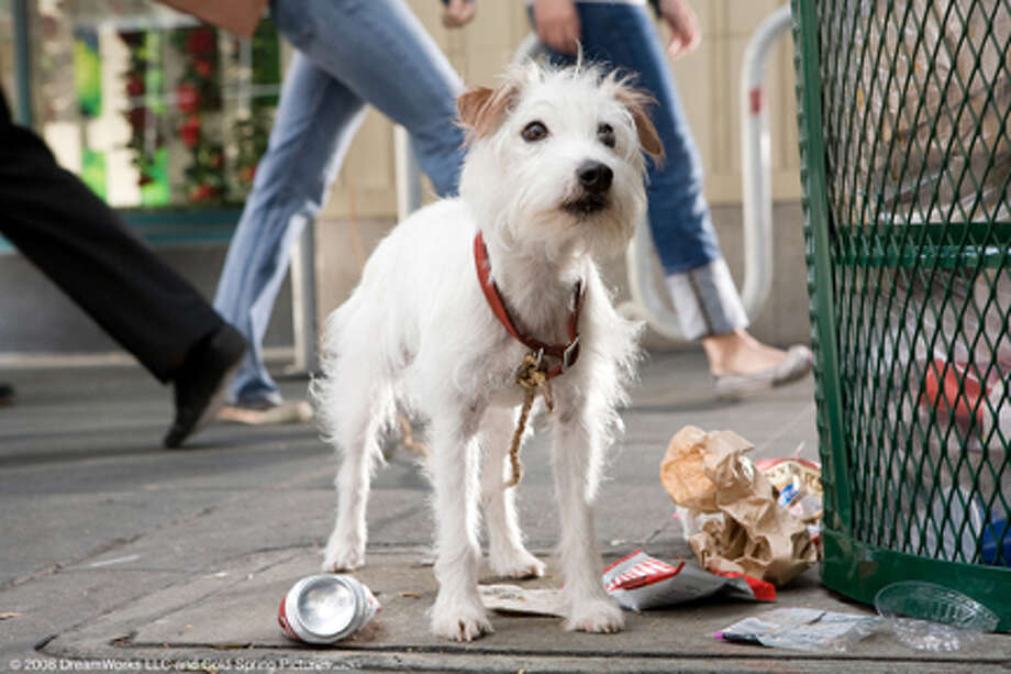 "Friday the dog in ""Hotel for Dogs."" Photo: Photo Credit: Jaimie Trueblood, Jaimie Trueblood / © 2008 DreamWorks LLC and Cold Spring Pictures. All Rights Reserved."