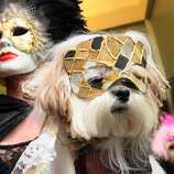 Dressed for the occasion, Candice Ball, left, and her dog Toshi, a Mi-Ki, center, arrive at the 2012 Pre-Westminster Fashion Show Friday Feb. 10, 2012 in New York. (AP Photo/Tina Fineberg) (AP)