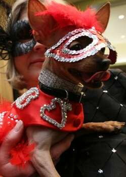 Dressed for the occasion, Phyllis Ludwig, of Lavon, Texas, poses for a photograph with her chihuahua Dixie Belle as they attend the 2012  Pre-Westminster Fashion Show Friday Feb. 10, 2012 in New York.  Dixie Belle is a nursing home volunteer dog.  (AP Photo/Tina Fineberg) (AP)