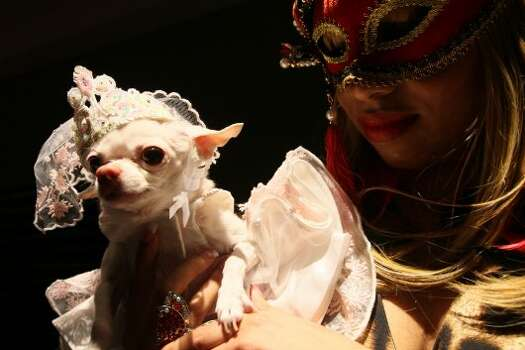 Dressed for the occasion, Daisy, a Chihuahua, and Ashley Alfonso take part in the 2012 Pre-Westminster Fashion Show Friday Feb. 10, 2012 in New York. (AP Photo/Tina Fineberg) (AP)
