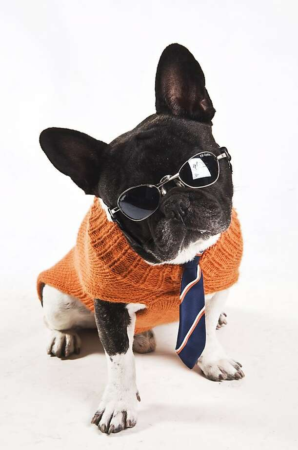Satchmo, a French Bulldog, is wearing an orange wool turtleneck sweater with a repp-striped tie. Satchmo  is the dog of Paula West. 