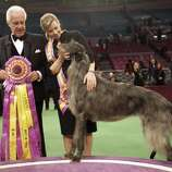 FILE - In this Feb. 15, 2011, file photo, Scottish deerhound Hickory poses for photographers with her handler Angela Lloyd, right, and judge Paolo Dondina after Hickory won best in show during  the 135th Westminster Kennel Club Dog Show at Madison Square Garden in New York. More than 2,000 of dogdom's finest will come in 185 breeds and varieties, coming from as far as Russia and China, for the 136th Westminster Kennel Club Dog Show on Feb. 13-14, 2012. (AP Photo/Mary Altaffer, File) (AP)