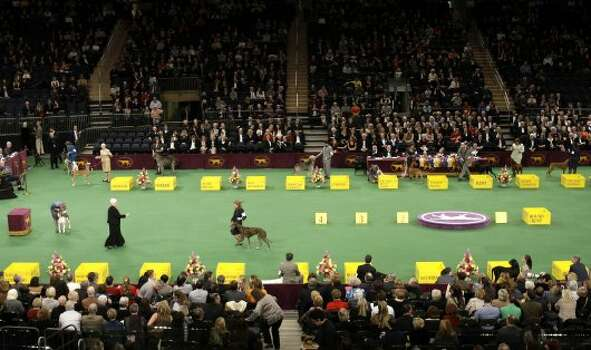 Dogs and their handlers compete at the 136th annual Westminster Kennel Club dog show in New York, Monday, Feb. 13, 2012. (AP Photo/Seth Wenig) (AP)