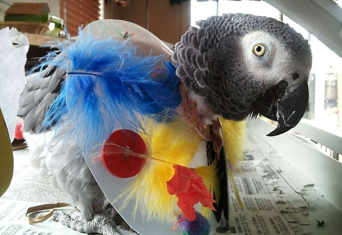 Photos of Muriel, the African Grey