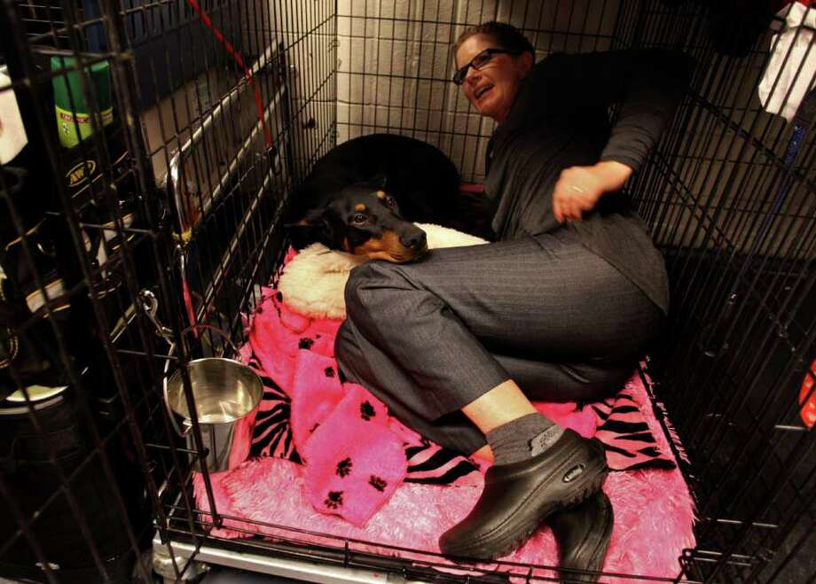 Fifi, a doberman pinscher, is joined in her cage by co owner Suzy Lundy of Oregonia, Ohio in the backstage area at the 136th annual Westminster Kennel Club dog show. Photo: Craig Ruttle, Associated Press / FR61802 AP