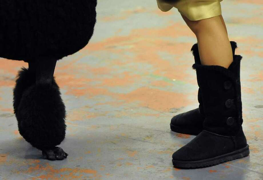A handler in a pair of Ugg boots and a Standard Poodle  in the staging area during the 136th Westminster Kennel Club  Annual Dog Show held at Madison Square Garden. Photo: TIMOTHY A. CLARY, AFP/Getty Images / AFP