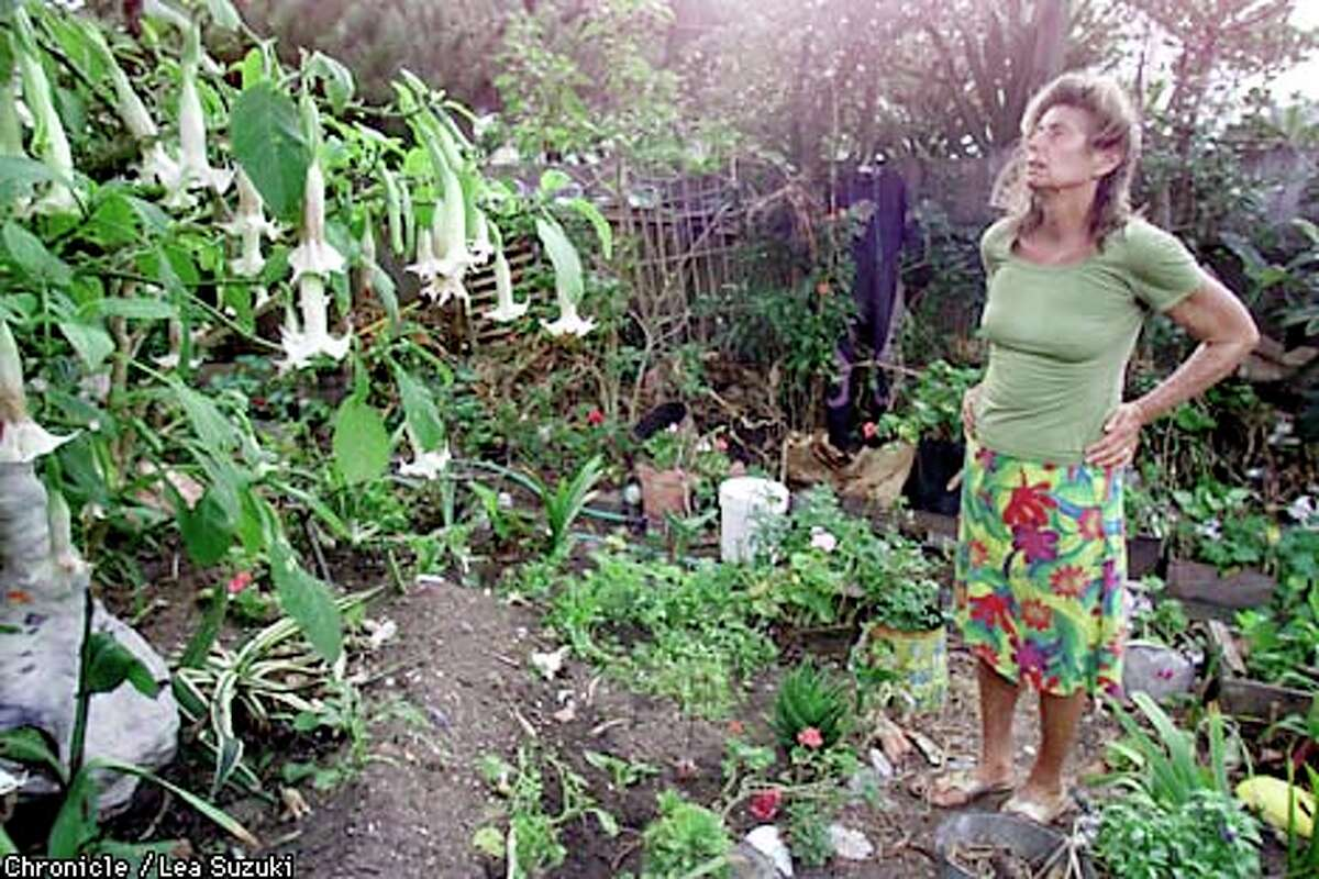 Carol Schultz, known as Queen of the Beach, surveyed the vegetable garden in the backyard of her home. Chronicle photo by Lea Suzuki