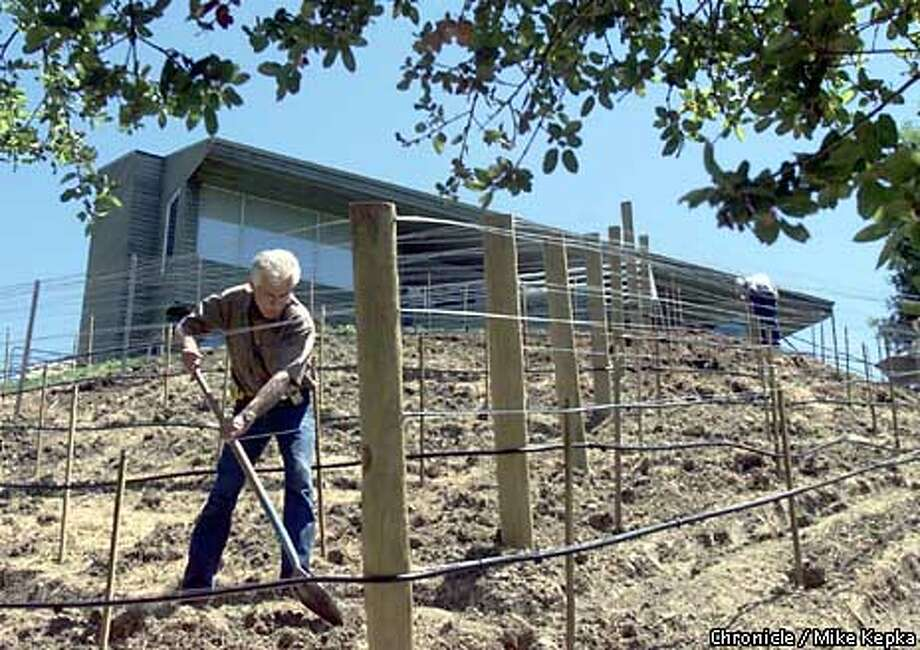 Diablo Vineyard's co-founder Tom Powers worked the hillside vineyard his company recently planted behind a home in Lafayette. Chronicle photo by Mike Kepka