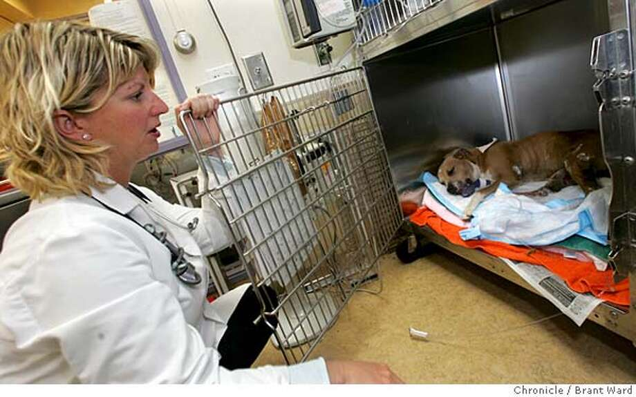 "A pitbull puppy rests at Pets Unlimited in San Francisco after being set on fire in a Hunters Point neighborhood Sunday. Veterinarian Brittney A. Calcott, who treated the dog's burns and others have named her ""Ember."" Brant Ward 7/26/05 Photo: Brant Ward"