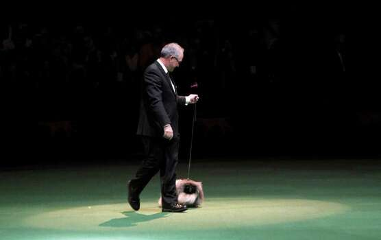 Malachy, a Pekingese, is handled by owner David Fitzpatrick as he competes for best in show during the 136th annual Westminster Kennel Club dog show, Tuesday, Feb. 14, 2012, in New York. Malachy was named best in show. Photo: Jason DeCrow