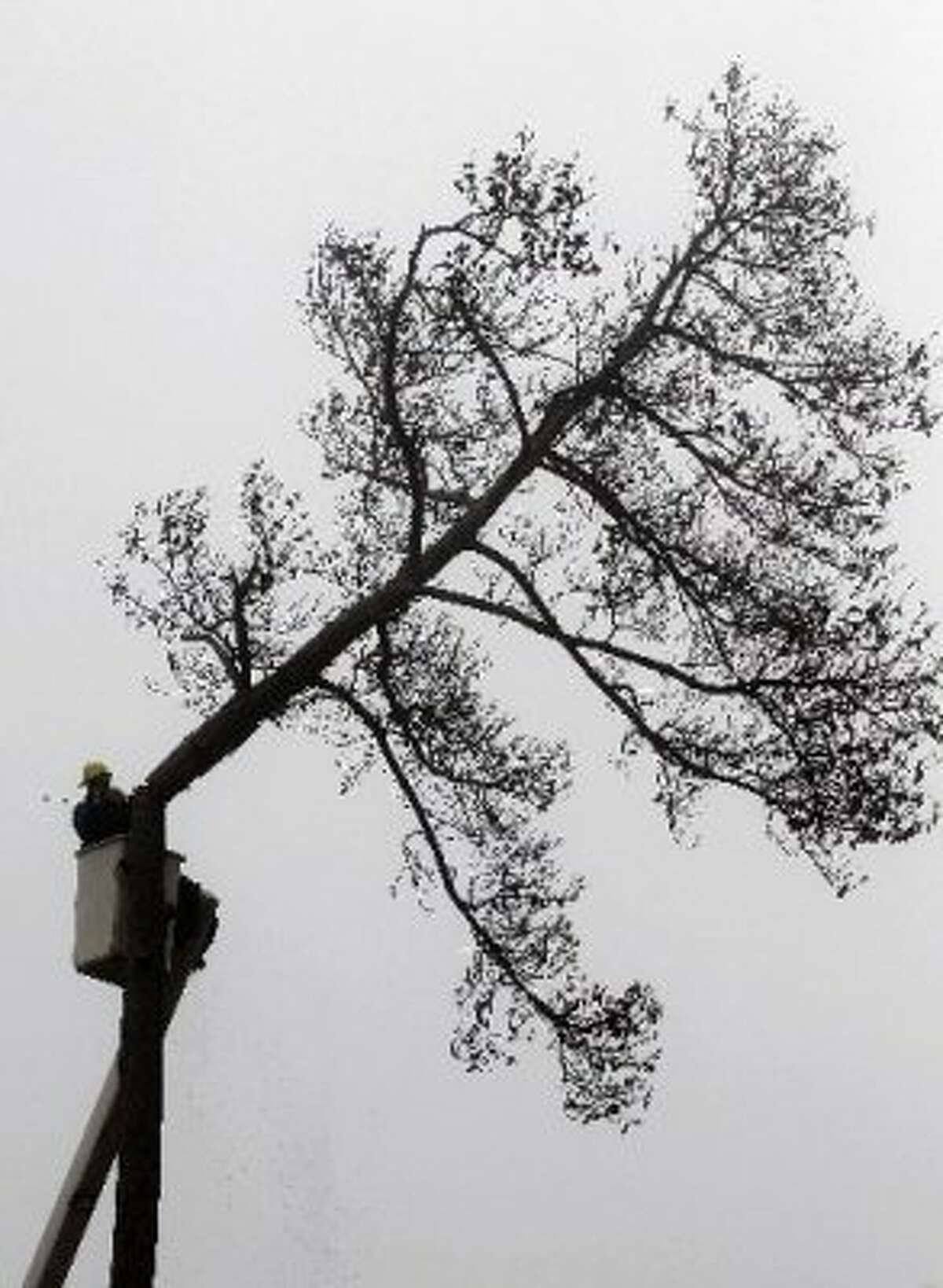 Omar Araujo cuts down a dead tree at Meyer in the morning fog Thursday, Dec. 29, 2011, in Houston. More than 1,800 dead trees are being removed from the park due to the ongoing drought. (David J. Phillip / AP)