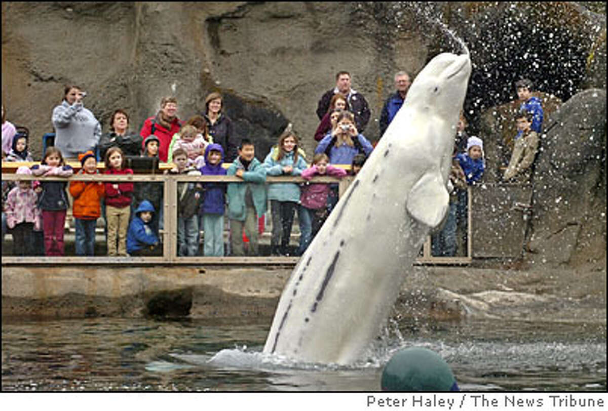 (Honorable Mention) Point Defiance Zoo and Aquarium -- Tacoma, Wash.