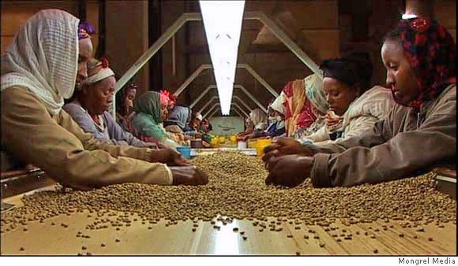 "Coffee pickers sorting beans in this stills from the documentary film ""Black Gold"" from Mongrel Media Photo: Mongrel Media"