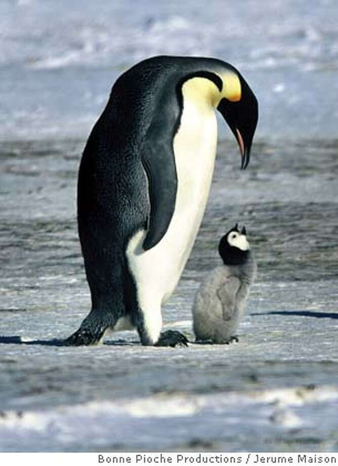 "An Emperor penguin and its young are shown in a scene from the new documentary film ""March of the Penguins"" from Warner Independent Pictures in this undated publicity photograph. With box offices receipts down for the year and fans blaming boring remakes and sequels, three documentaries that are part of a new style of non-fiction films are winning rave reviews for turning real people -- and in one case, penguins -- into movie stars. ""Murderball,"" ""Rize,"" and ""March of the Penguins"" are more like Hollywood feature films, their makers and promoters say, structured with tension, conflict and resolution. To match feature Leisure-Documentaries REUTERS/J�r�me Maison/Bonne Pioche Productions/Alliance De Production Cin�matographique/Handout Ran on: 07-24-2005  Emperor penguins in &quo;March of the Penguins,&quo; which is giving the summer block- busters a run for the money. Ran on: 07-27-2005  Survivors: An emperor penguin and its offspring in a scene from &quo;March of the Penguins,&quo; a documentary that prompts comparisons to human society. 0 Photo: Bonne Pioche Productions"