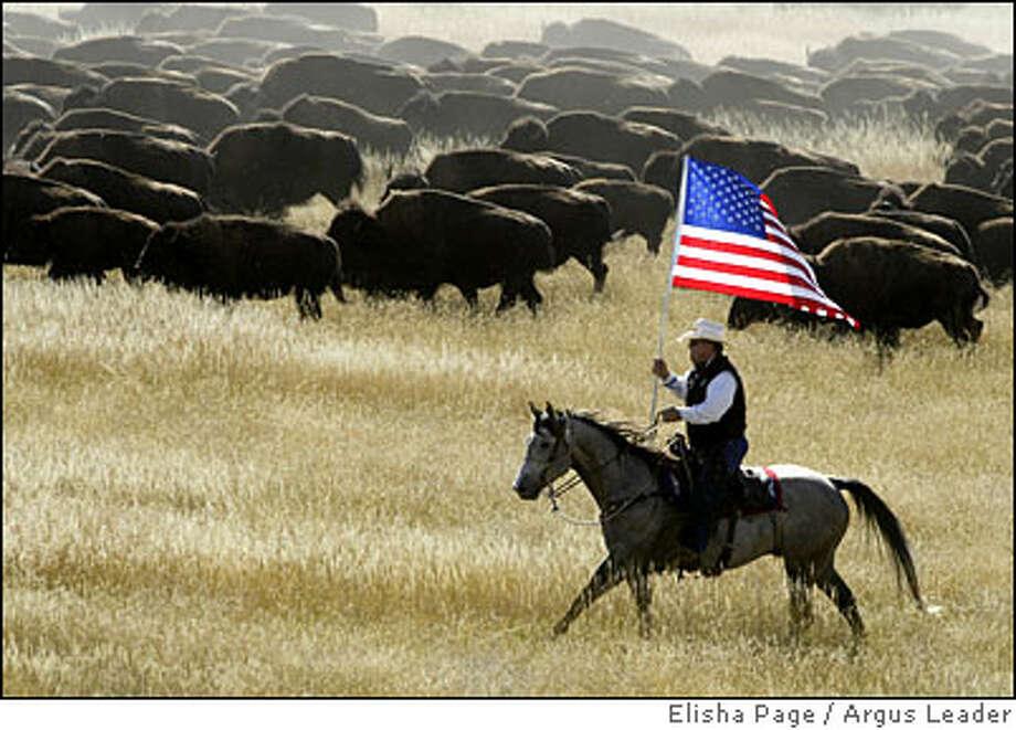 custer state park buffalo roundup Photo: Elisha Page