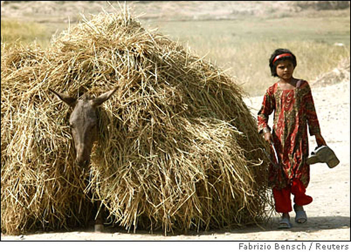 An Afghan girl walks with her donkey carrying hay in Kunduz
