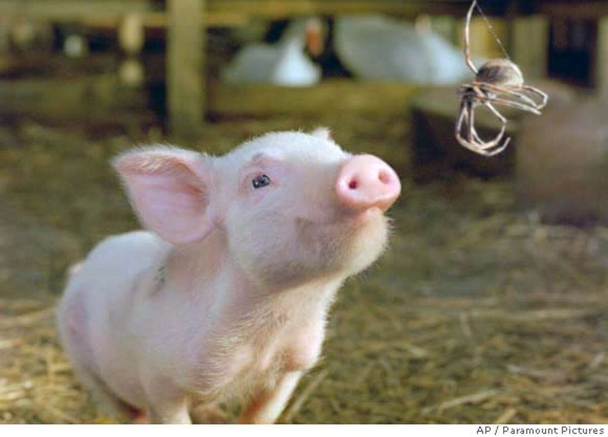 """In this photo provided by Paramount Pictures, Wilbur develops a friendship with the most unlikely of creatures--a spider named Charlotte--and their bond inspires the animals around them to come together as a family in """"Charlotte's Web."""" (AP Photo/Paramount Pictures)"""