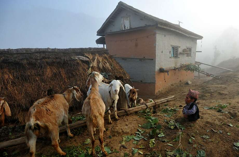 This man is not standing in a hole: Chandra Bahadur Dangi, a 72-year-old pensioner, tends his goats at his home in the Nepalese village of Reemkholi. Guinness World Records experts confirmed his claim that he stands 56 centimeters (22 inches), making him the shortest man on record in history. Photo: Prakash Mathema, AFP/Getty Images
