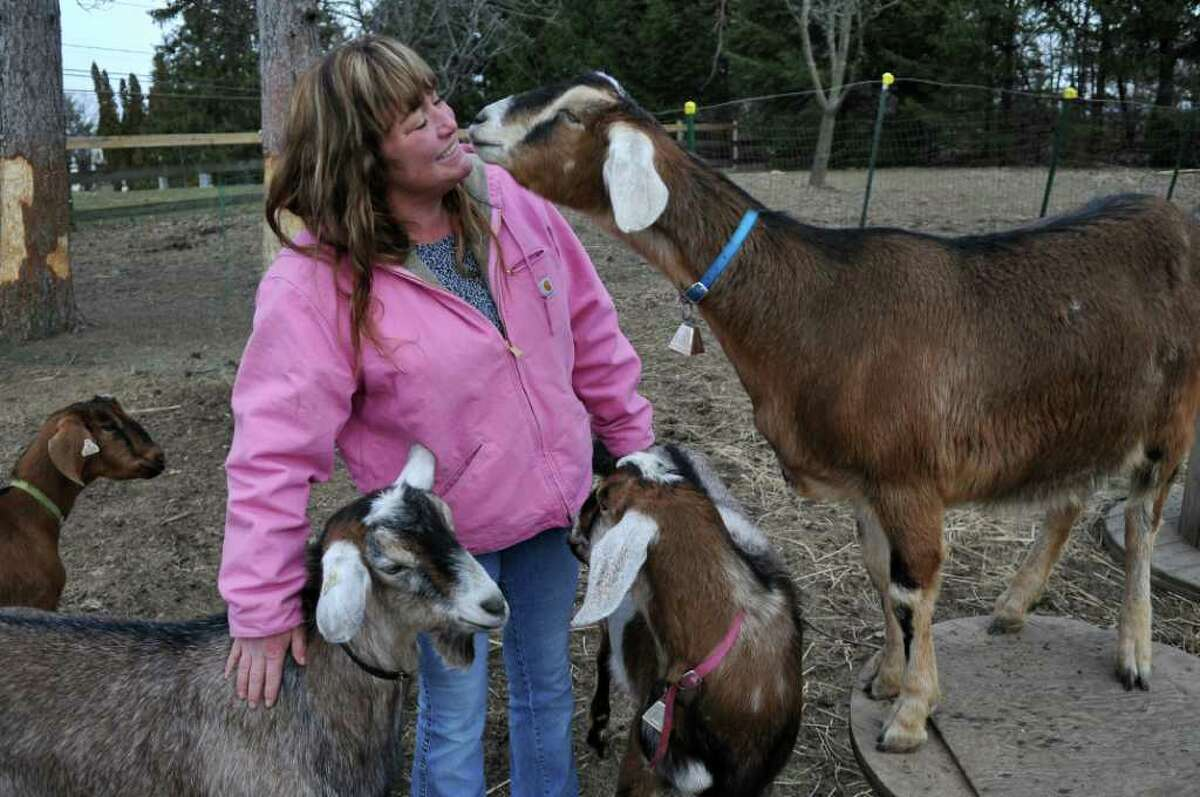 Karen Bruno's nubian goats were attacked by a siberian husky on Saturday, after which the dog was shot by the animal control officer. She spent some time with Danny, lower left, Baby, second from left, Jack, lower right, and Joey, all healthy, on Monday, Feb. 14, 2012 in Selkirk, N.Y. (Philip Kamrass / Times Union)