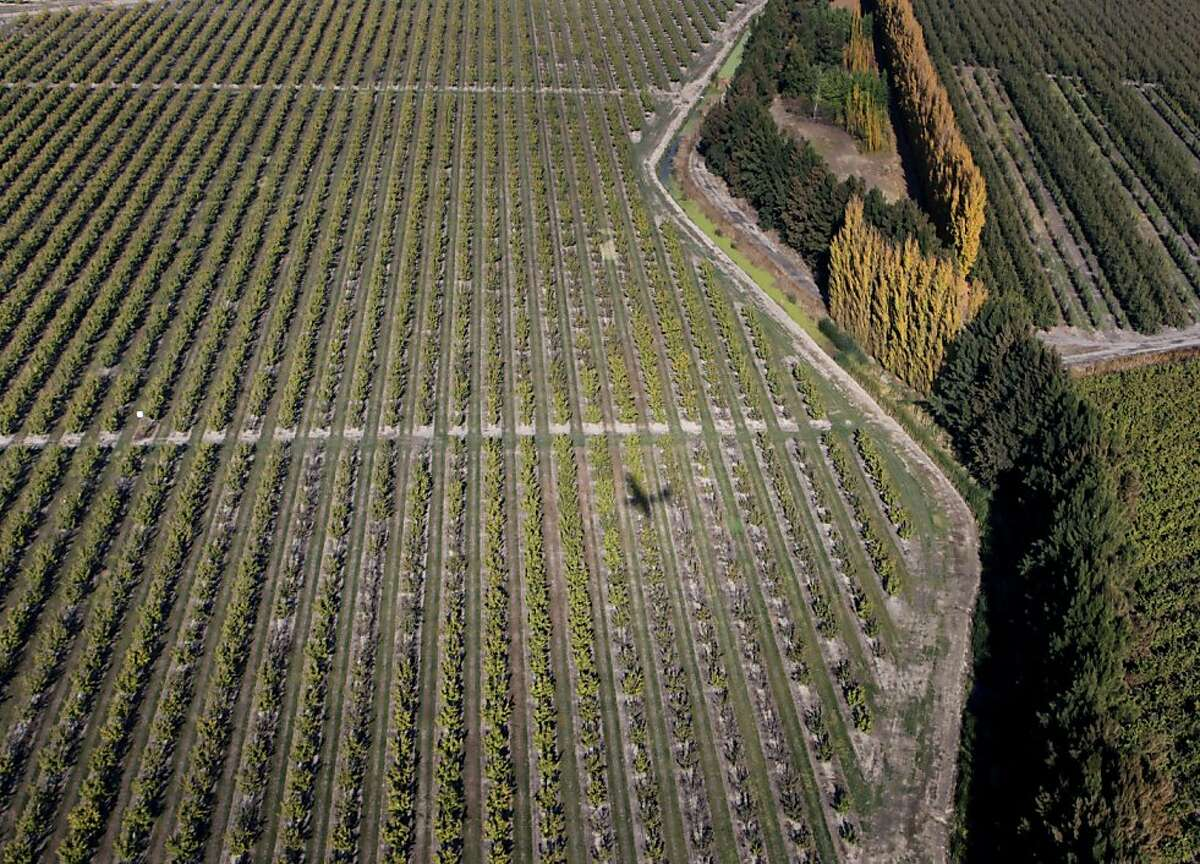 An airplane casts a shadow on an orchard in the Sacramento-San Joaquin River Delta region on Wednesday, Nov. 9, 2011. If built, the Peripheral Canal would divert fresh water to the south and could have a significant impact on the future of the Sacramento-San joaquin River Delta, its wildlife and local farming.