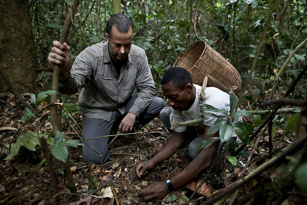 Nathan Wolfe watches a bushmeat hunter set a trap in Southern Cameroon