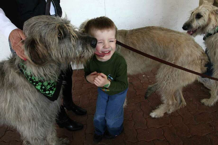 Surrounded by Irish wolfhounds, four-year-old Mitchell Frazier gets acquainted with Brady, a two-year-old dog, during the Irish Cultural Society of San Antonio's 15th annual Irish Heritage Day at the Leon Valley Community Center, Sunday, Feb. 19, 2012. JERRY LARA/glara@express-news.net Photo: Jerry Lara, San Antonio Express-News / © 2012 San Antonio Express-News