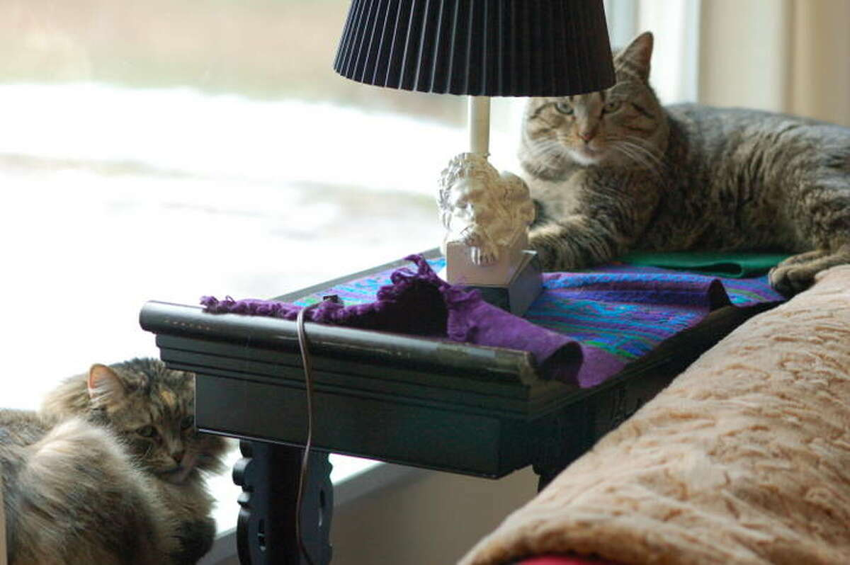 Rocky, a two-year-old male tiger, and Rigby, a five-year-old spayed female, are new friends who bonded quickly. Both are very affectionate and are available for a two-for-one adoption fee. (Jill Perkins)