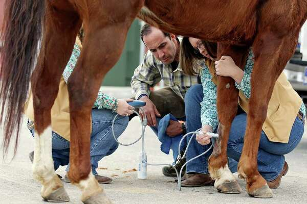 FOR METRO - Veterinarian Benjamin Espy (center), and veterinary interns Ashley Stricklin (left) and Megan Kirkland use an ultrasound to check a horse's leg, between rodeo performances, at the San Antonio Stock Show & Rodeo Sunday Feb. 19, 2012 at the AT&T Center.